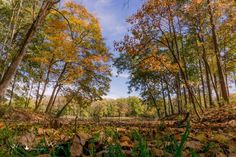 Autumn at Fowler Park in Vigo County Indiana captured by Wandering Ways Photography 2016