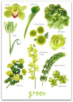 Green flowers - my favourite is Bells of Ireland. They smell so good. @Tonya Seemann here's some ideas