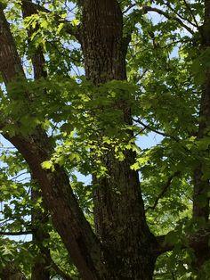 #tree #theidearoom #photoaday