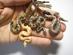 I thought these were actual baby sneks till I saw the cords! Polymer Clay Figures, Cute Polymer Clay, Polymer Clay Animals, Cute Clay, Polymer Clay Projects, Polymer Clay Creations, Diy Clay, Polymer Clay Jewelry, Costume Meduse