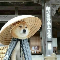 It's been a month since Kotaro passed away. The picture is when he was old, 2014 Cute Funny Animals, Cute Baby Animals, Animals And Pets, Cute Cats, Chien Shiba Inu, Cute Puppies, Dogs And Puppies, Corgi Puppies, Happy Paw