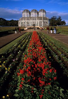 The botanical garden in Curitiba, Parana, one of the most modern cities. #Brazil