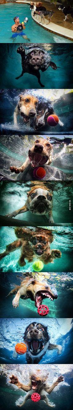 Dogs + ball + Underwater camera