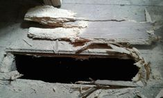Wood worm infestation in floor boards.which I fell through! Worms, I Fall, Beetle, Mother Nature, Shapes, Flooring, Furniture, June Bug, Beetles