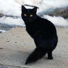 The Blackest of Cats | There are so many black cats in the w… | Flickr - Photo Sharing!