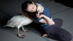 Dancing With Swans: Luc Petton, a choreographer, brings both swans and dancers together on stage and in everyday life.