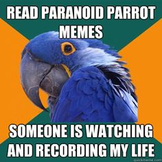 read paranoid parrot memes someone is watching and recording - Paranoid Parrot