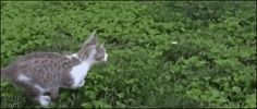 Sharing Funny cats - part 184 (40 pics + 10 gifs) Love ~ I Love Funny Animal | Mid-air collision