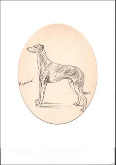 Vintage Greyhound Dog Sketch 1937 Art Print  by Lucy Dawson 11X14