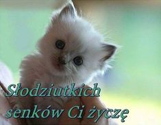 Good Night All, Good Morning, Magic Day, Diy And Crafts, Humor, Cats, Animals, Image, Sodas