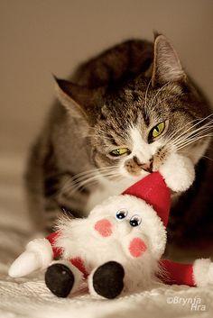 I always imagined that Santa was bigger, Human.