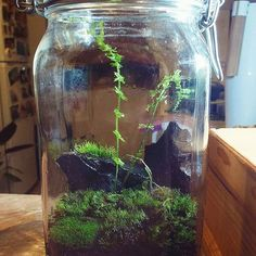 Moss and fern terrarium. Ferns, Terrarium, Aquarium, Plants, Terrariums, Fish Stand, Aquarius, Fish Tank, Fern