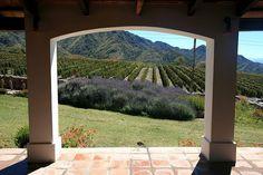 Argentina winery