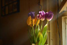 Rustic by Petya Dimitrova on 500px