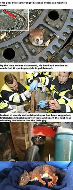 The good people in this world <3 Firefighters save a squirrel
