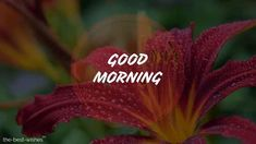 Beautiful Good Morning Wishes With Flowers [ Best HD Images ] Beautiful Good Morning Wishes, Good Night I Love You, Good Morning Beautiful Flowers, Good Morning Messages, Good Morning Good Night, Morning Pictures, Good Morning Images, Good Morning Quotes, Happy Morning
