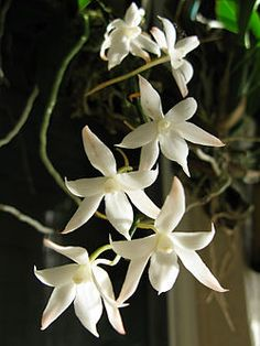 Orchid Plant Care, Orchid Plants, Orchids, Tips, Flowers, Royal Icing Flowers, Flower, Florals, Floral
