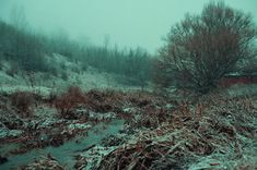 Still looking for the winter #winter #cold #landscape #river #trees #field