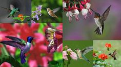7 Amazing Facts about Incredible Hummingbirds - Brisk Post In respect to the body weight, they own the largest brain and heart in the world.