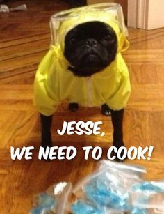 For Breaking Bad Fans LOL. Funny Pug Dog Meme