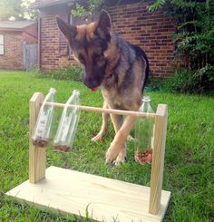 Look at this awesome homemade dog toy! What a cool idea! Here are some that don't require assembly from scratch: https://www.animalhub.com/8-great-toys-for-german-shepherd-dogs/