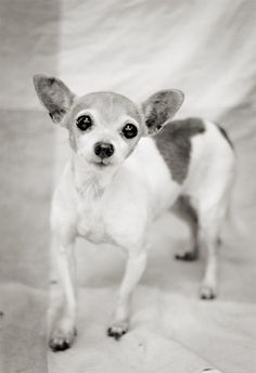 Shelter Dog Photography Black and White by kaelynmichaels on Etsy, $12.00