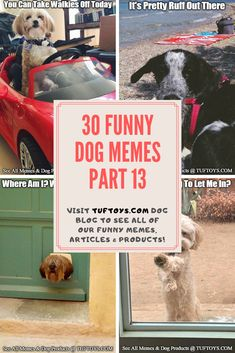 Check Out Comical New Pics Of Cute Dogs Such As Peekapoos, German Shepherds & Yorkipoos & Read What They're Really Thinking With Our State Of The Art Mind Reading Machine, Only @ TufToys.com :) Funny Dog Memes, Funny Dogs, Cute Dogs, Funny Animals, Dog Water Fountain, Dog Dna Test, Waterproof Dog Coats, Dog Crate Cover, Durable Dog Toys