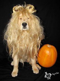lion dog costume, lion costume, animal costume, funny costumes