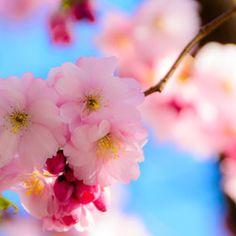 gorgeous view #flowers #pink #blueskies