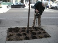 """A demonstration project in Chicago done by Bartlett Tree Experts: """"If biochar were to improve the growing conditions of urban trees, enabling them to live longer, its use could save municipalities and property owners in tree-replacement costs and help preserve valuable urban tree canopy."""""""
