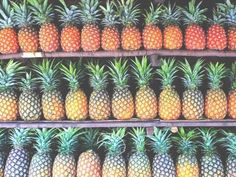 Rows and rows of tropical pineapple. Design Pop Art, I Need Vitamin Sea, Good Vibe, Palmiers, Summer Of Love, Pink Summer, Summer Fruit, Summer 2014, Enjoy Summer