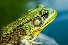 Barry Kidd Photography Photographing Frogs - An Afternoon Crawling in the Mud
