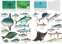 انواع الاسماك - بحث Google Types Of Fish, Eggplant, Vegetables, Eggplants, Vegetable Recipes, Veggies