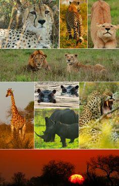Londolozi, South Africa