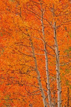fall colors in Red Mountain Pass, Ouray, Colorado Beautiful World, Beautiful Places, Changing Leaves, Autumn Scenery, All Nature, Fall Pictures, Belleza Natural, Belle Photo, Autumn Leaves