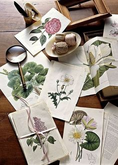 antique botanicals by AnastasiaC @ percivalroad, via Flickr