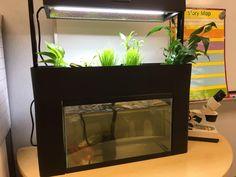 Classroom #aquaponics
