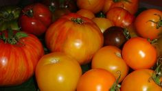 Heirloom tomatoes are varieties handed down through generations, perhaps with the seeds passed within families.