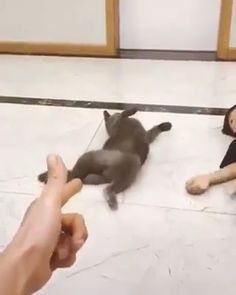 Give this cat an Oscar - Time to play dead. Funny Cute Cats, Cute Cats And Kittens, Cute Funny Animals, Cute Baby Animals, Kittens Cutest, Animals And Pets, Funny Animal Memes, Funny Animal Videos, Funny Animal Pictures