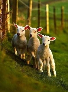 The smell of baby animals. An essential part of spring.