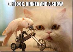 Dinner And A Show Meme | Slapcaption.com http://psychocrypt.com