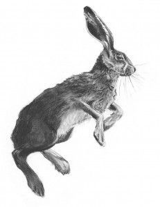sketch of leaping rabbit - Google Search