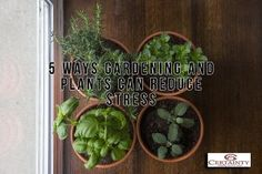 5 Ways Gardening And Plants Can Reduce Stress ~ For a closer look, green industry experts at RISE (Responsible Industry for a Sound Environment) offer these five ways gardening can help you create a stress-relieving sanctuary at home. READ MORE. House Plants Hanging, Hanging Herbs, Landscaping With Rocks, Landscaping Tips, Reading My Tea Leaves, Plastic Planters, Benefits Of Gardening, Interior Design Plants, Smart Garden