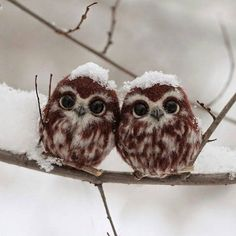 Baby Owls | Photography by  Irina Shcherbakova. #OurPlanetDaily by ourplanetdaily
