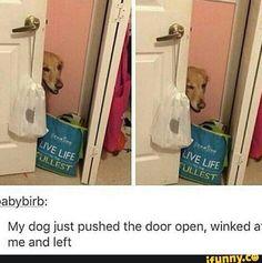 #memes #doggo