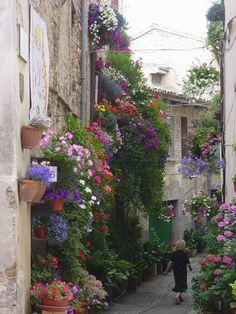 Spello: finestre, balconi e vicoli fioriti