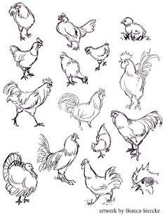 Raccoons Drawing Sketches | Bianca Siercke: Animal drawings 03 Easy Animal Drawings, Animal Sketches, Bird Drawings, Love Drawings, Drawing Sketches, Chicken Drawing, Chicken Art, Hahn Tattoo, Raccoon Drawing