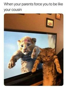 Cat, as a pet is adorable. Cat Memes are damn funny. So, We thought to collect the best Cat Memes of the Internet and Funny Animal Jokes, Funny Animal Photos, Funny Cat Memes, Cute Funny Animals, Animal Memes, Funny Pictures, Funny Humor, Funny Pics, Baby Pictures