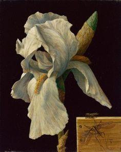 Flower Of Life, Flower Art, Iris, Traditional Witchcraft, Contemporary Artists, White Flowers, Still Life, Illustrator, December