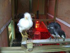 Heating the Chicken Coop